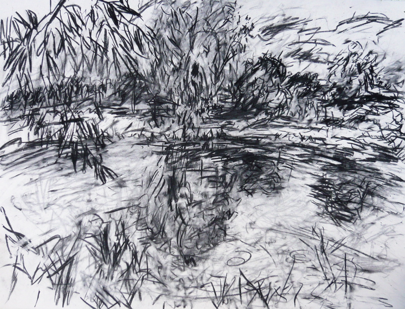 Willow at the Warren, charcoal - July 2009